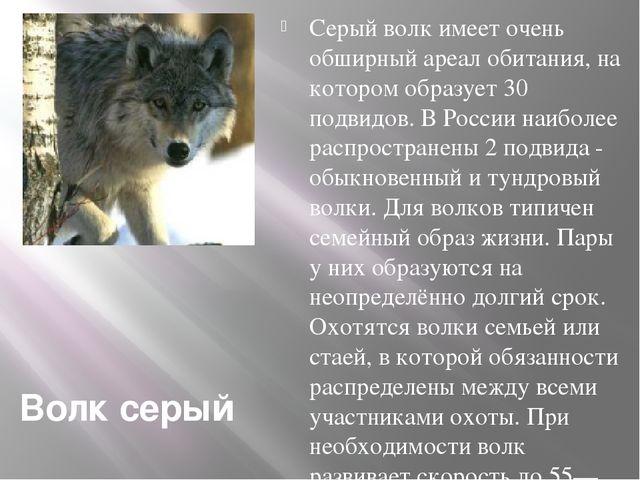 Волк серый Серый волк имеет очень обширный ареал обитания, на котором образуе...