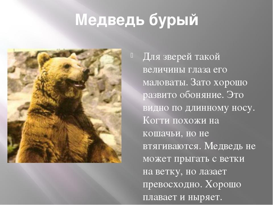 Медведь бурый Для зверей такой величины глаза его маловаты. Зато хорошо разви...