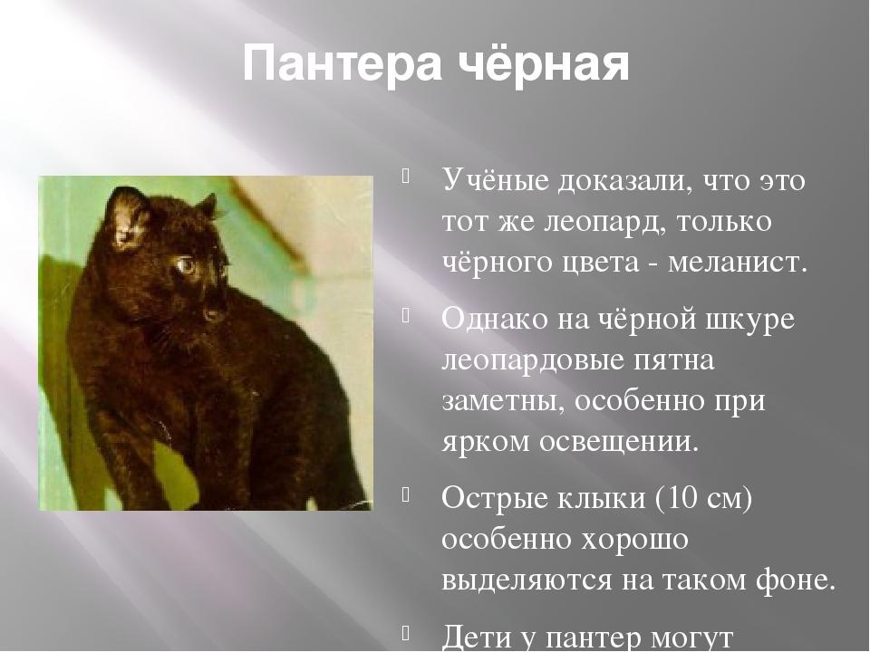 Пантера чёрная Учёные доказали, что это тот же леопард, только чёрного цвета...