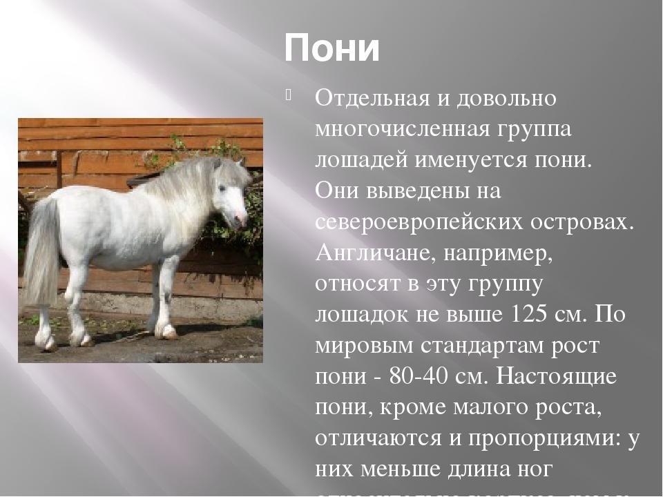 Пони Отдельная и довольно многочисленная группа лошадей именуется пони. Они в...