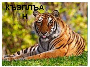 КЪЭПЛЪАН