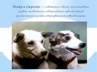 Белка и Стрелка—советские собаки-космонавты, первые животные, совершившие