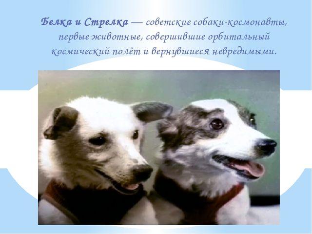 Белка и Стрелка—советские собаки-космонавты, первые животные, совершившие...