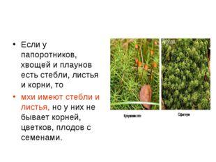 Если у папоротников, хвощей и плаунов есть стебли, листья и корни, то мхи име