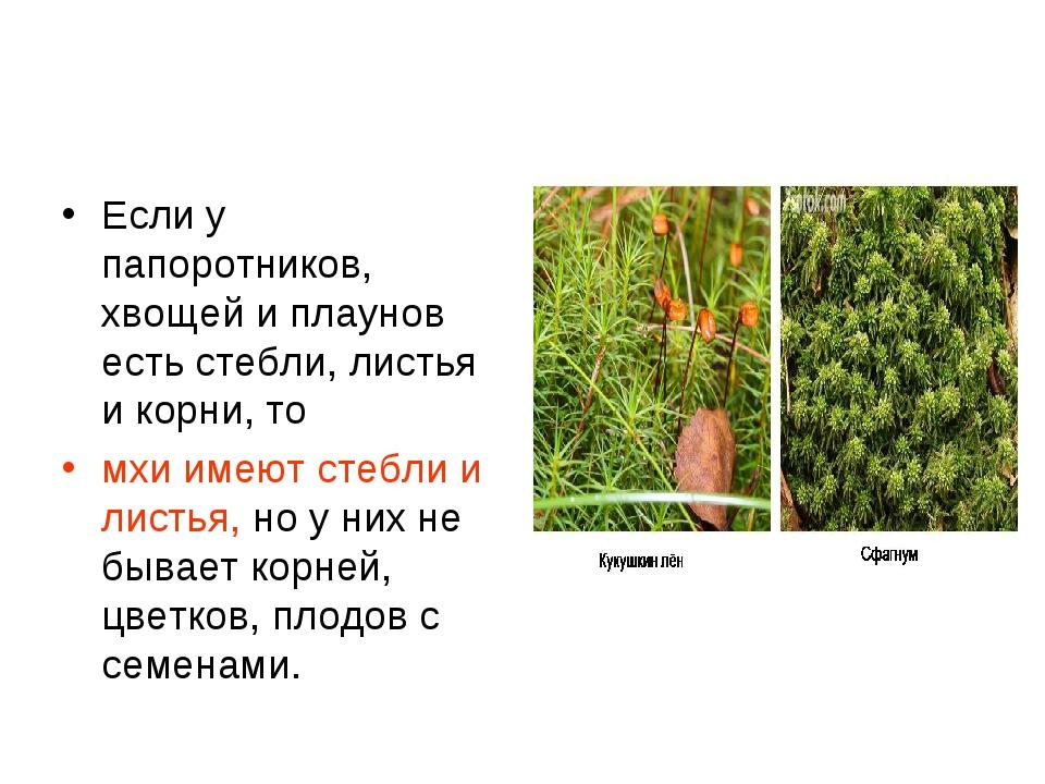 Если у папоротников, хвощей и плаунов есть стебли, листья и корни, то мхи име...