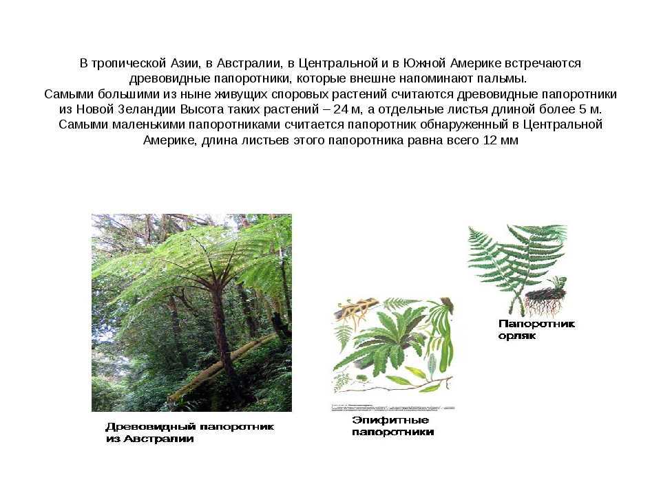 В тропической Азии, в Австралии, в Центральной и в Южной Америке встречаются...