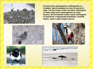 На прогулках проводились наблюдения за птицами, прилетающими на участок детск
