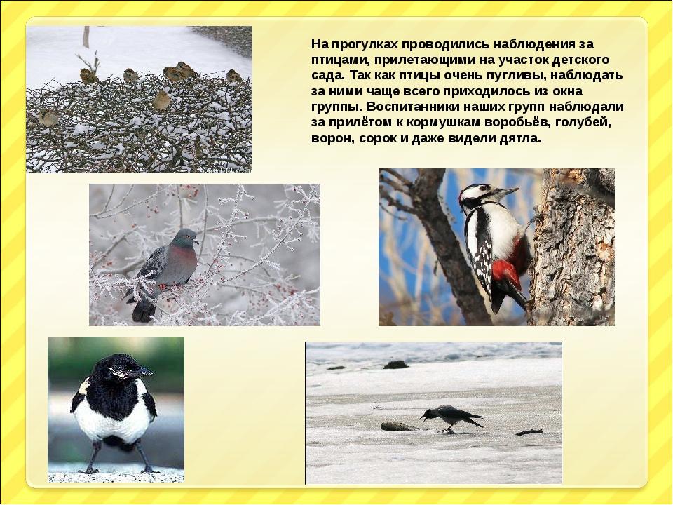 На прогулках проводились наблюдения за птицами, прилетающими на участок детск...