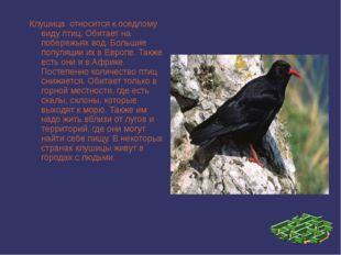 Клушица относится к оседлому виду птиц. Обитает на побережьях вод. Большие п