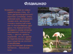 Фламинго Фламинго — одни из самых удивительных птиц. Их тело диспропорциональ