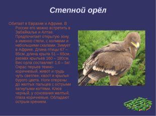 Степной орёл Обитает в Евразии и Африке. В России его можно встретить в Забай