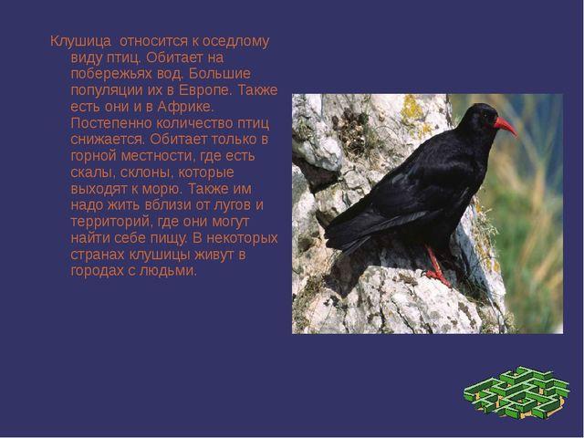 Клушица относится к оседлому виду птиц. Обитает на побережьях вод. Большие п...