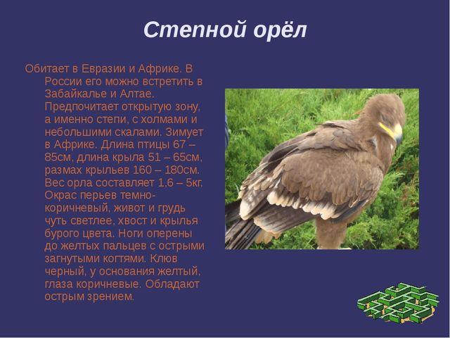 Степной орёл Обитает в Евразии и Африке. В России его можно встретить в Забай...