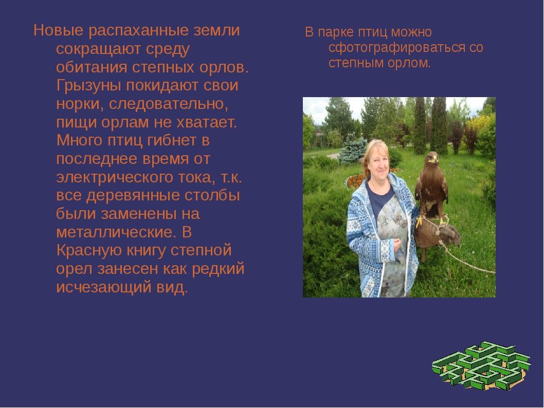 Новые распаханные земли сокращают среду обитания степных орлов. Грызуны покид...