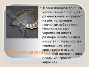 Черепаха двухкоготная Длина панциря до 50 см, масса свыше 15 кг. Для размноже