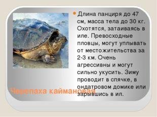 Черепаха каймановая Длина панциря до 47 см, масса тела до 30 кг. Охотятся, за
