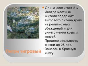 Питон тигровый Длина достигает 8 м. Иногда местные жители содержат тигрового