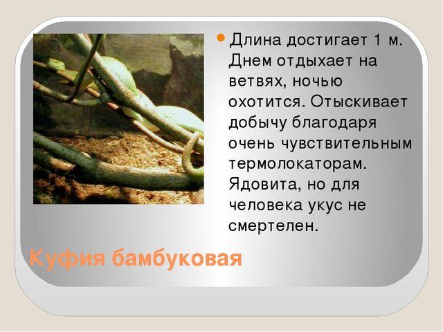 Куфия бамбуковая Длина достигает 1 м. Днем отдыхает на ветвях, ночью охотится...