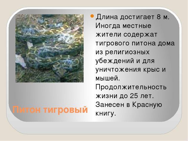 Питон тигровый Длина достигает 8 м. Иногда местные жители содержат тигрового...
