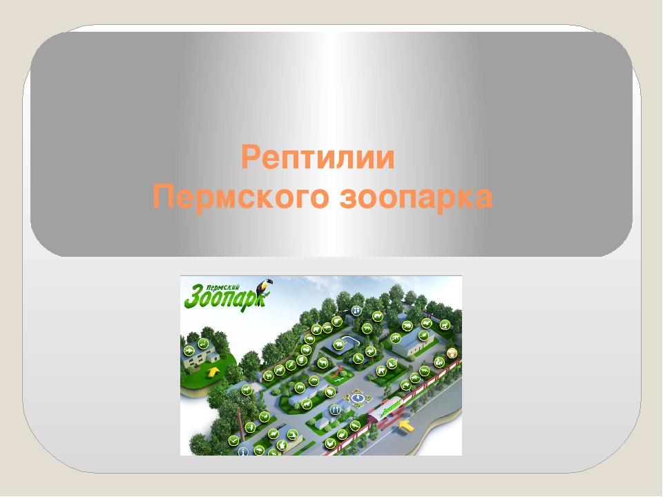 Рептилии Пермского зоопарка