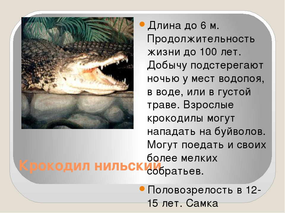 Крокодил нильский Длина до 6 м. Продолжительность жизни до 100 лет. Добычу п...
