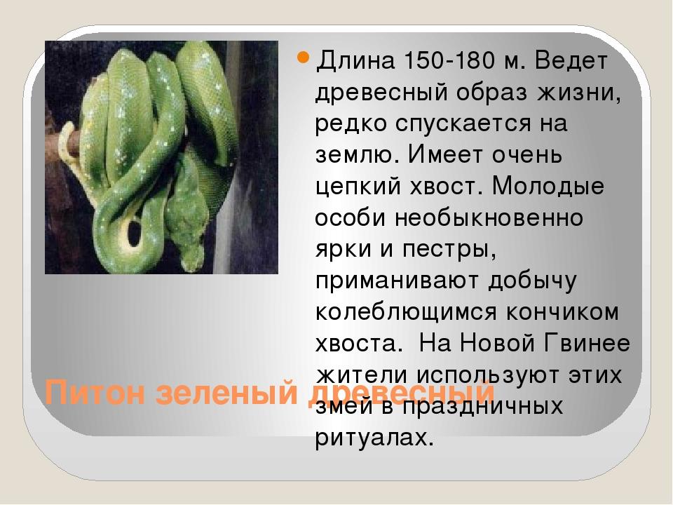 Питон зеленый древесный Длина 150-180 м. Ведет древесный образ жизни, редко...
