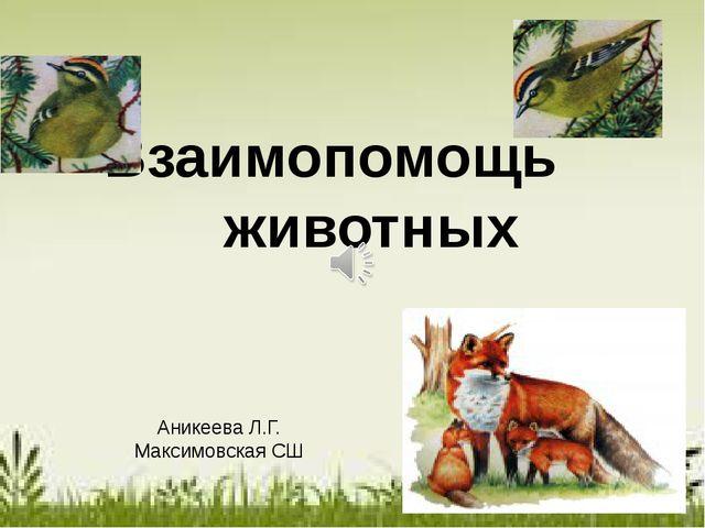 Взаимопомощь животных Аникеева Л.Г. Максимовская СШ