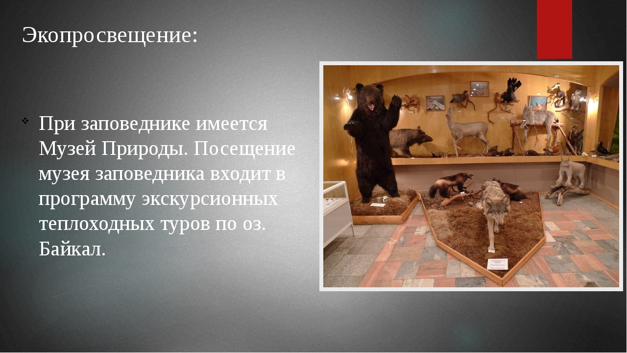 Экопросвещение: При заповеднике имеется Музей Природы. Посещение музея запове...