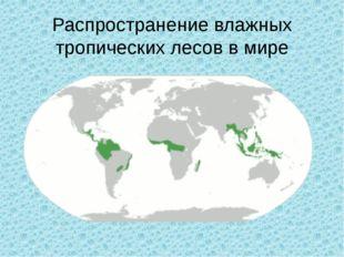 Распространение влажных тропических лесов в мире