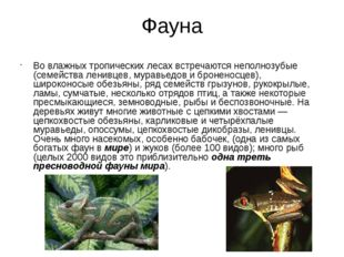 Фауна Во влажных тропических лесах встречаются неполнозубые (семейства ленивц