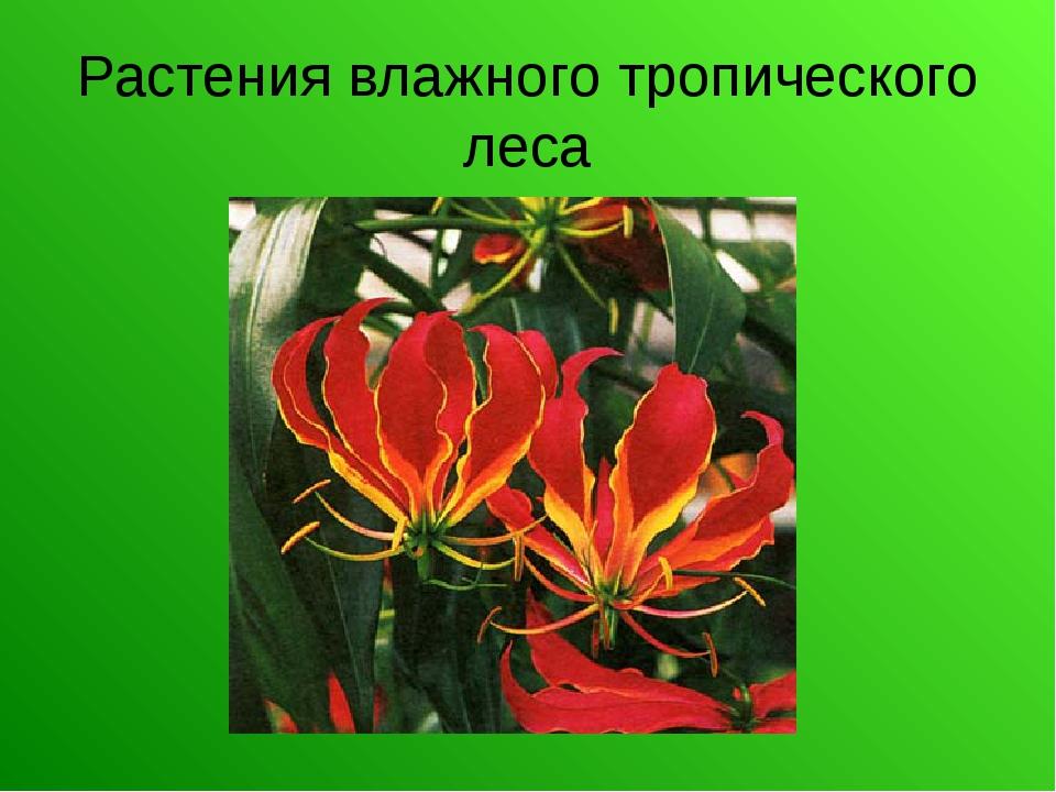 Растения влажного тропического леса