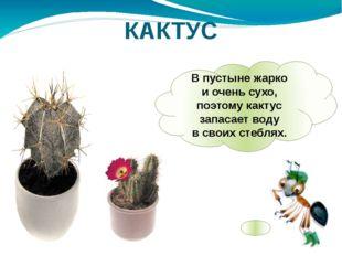 Впустыне жарко иочень сухо, поэтому кактус запасает воду всвоих стеблях. К