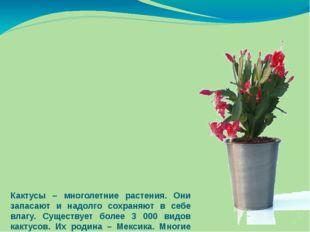 Кактусы – многолетние растения. Они запасают и надолго сохраняют в себе влагу