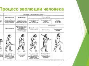 Процесс эволюции человека