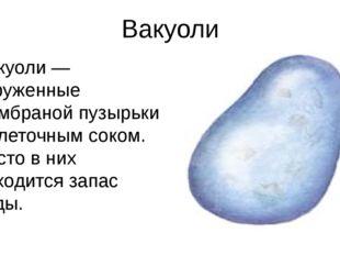 Вакуоли Вакуоли — окруженные мембраной пузырьки с клеточным соком. Часто в ни