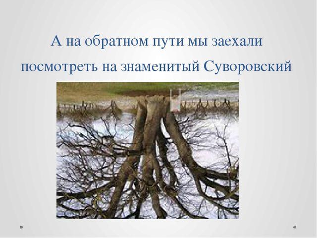 А на обратном пути мы заехали посмотреть на знаменитый Суворовский дуб