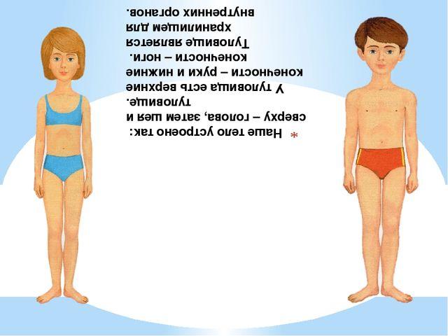 Наше тело устроено так: сверху – голова, затем шея и туловище. У туловища ест...