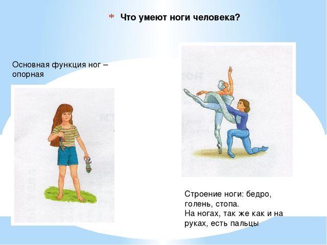Что умеют ноги человека? Основная функция ног – опорная Строение ноги: бедро,...