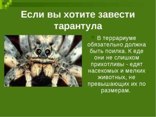 Если вы хотите завести тарантула В террариуме обязательно должна быть поилка.