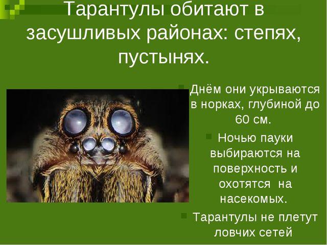 Тарантулы обитают в засушливых районах: степях, пустынях. Днём они укрываются...