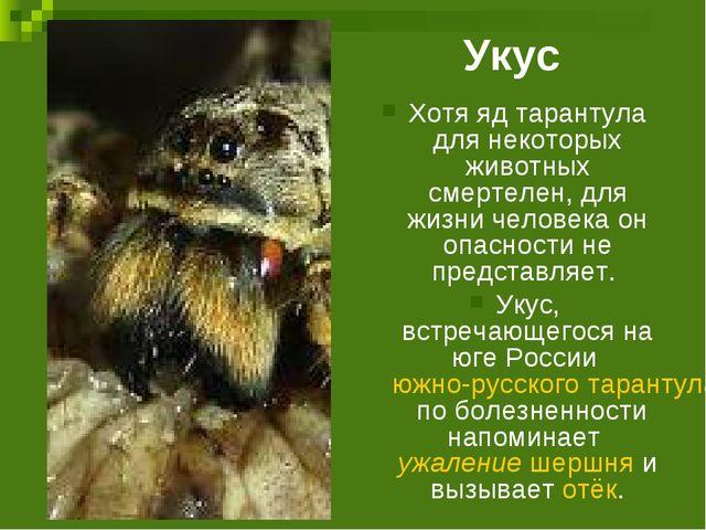 Укус Хотя яд тарантула для некоторых животных смертелен, для жизни человека о...