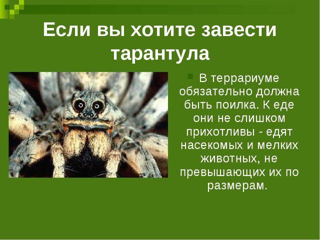 Если вы хотите завести тарантула В террариуме обязательно должна быть поилка....
