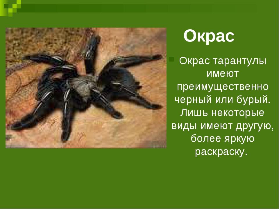 Окрас Окрас тарантулы имеют преимущественно черный или бурый. Лишь некоторые...