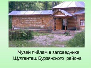 Музей пчёлам в заповеднике Шулганташ Бурзянского района