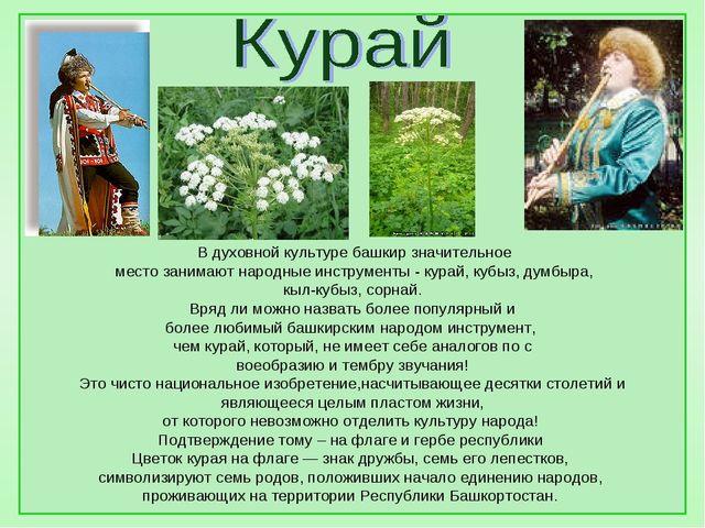 В духовной культуре башкир значительное место занимают народные инструменты...