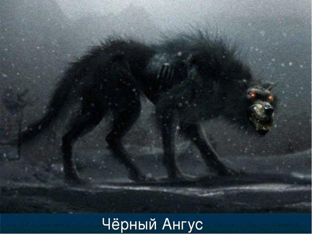 Чёрный Ангус