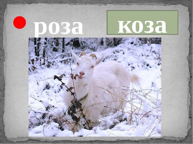 роза коза