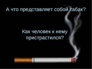 А что представляет собой табак? Как человек к нему пристрастился?