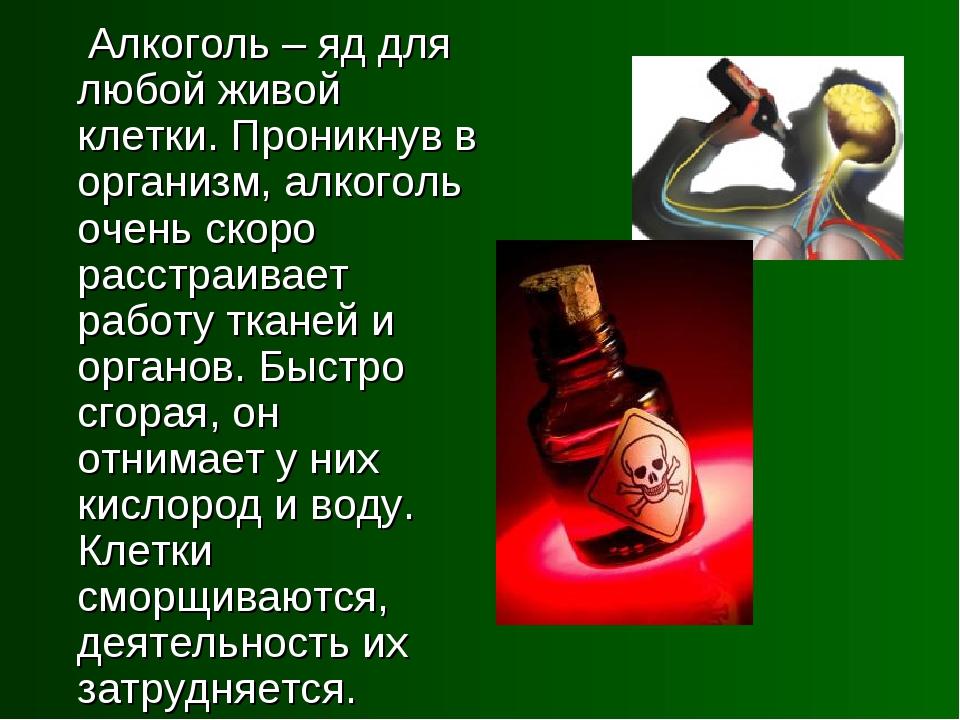 Алкоголь – яд для любой живой клетки. Проникнув в организм, алкоголь очень с...