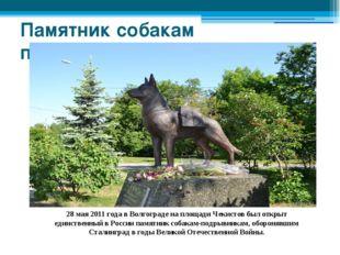 Памятник собакам подрывникам 28 мая 2011 года в Волгограде на площади Чекисто